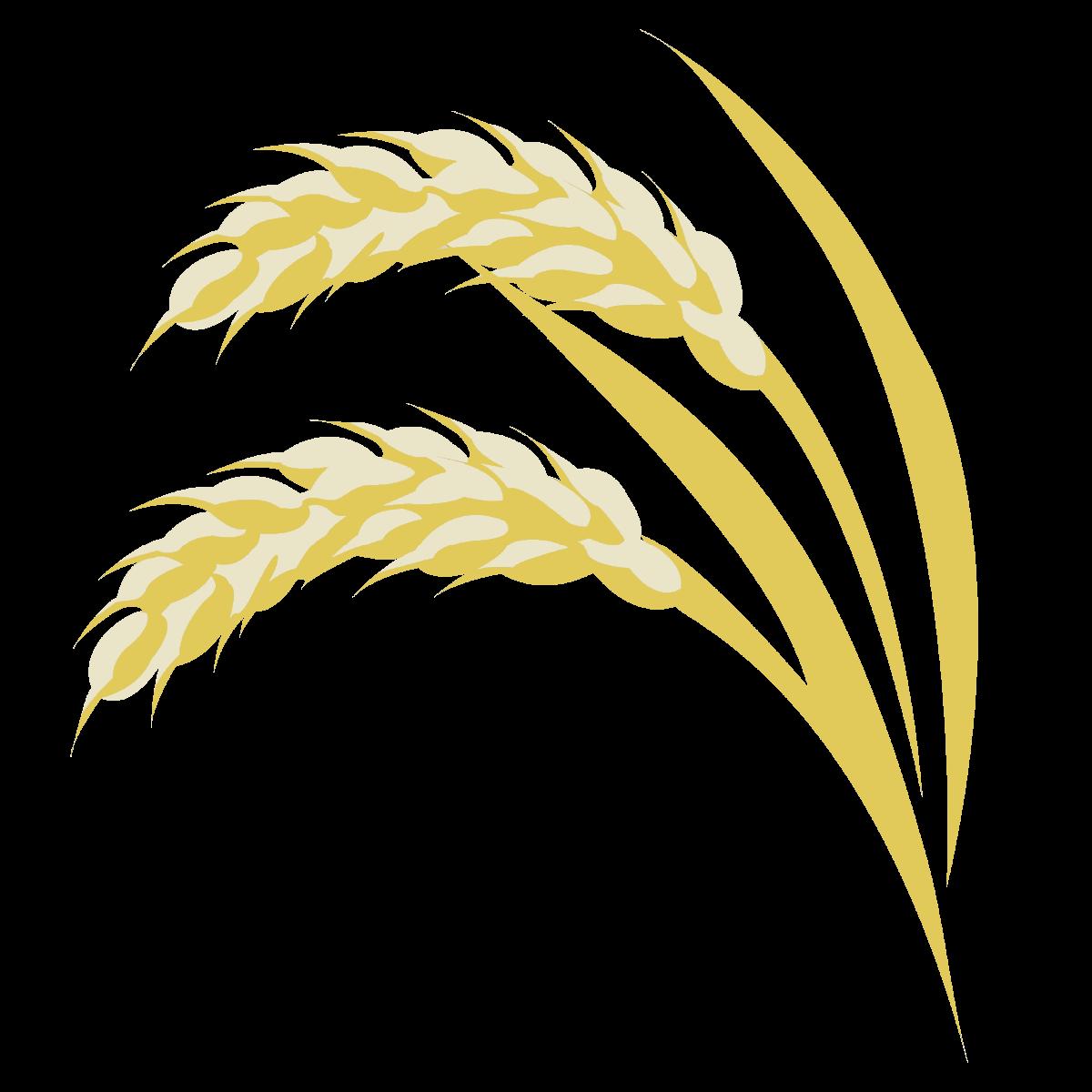 Akita Rice Fields
